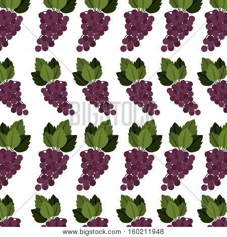 colorful pattern of bunch grapes with stem and leafs vector illustration