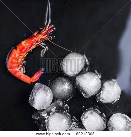 Fresh raw shrimps on a black board with ice - Food background with copy space