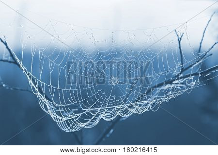 toned in blue color image cobweb with water drops