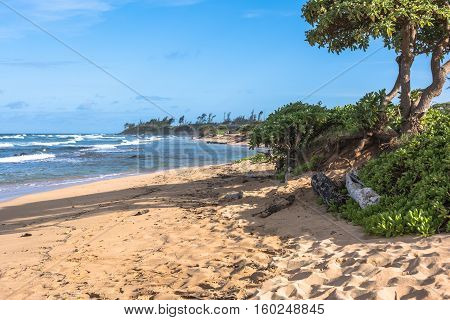 Vegetation along the Lihue coast in Kauai, Hawaii