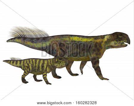 Psittacosaurus Dinosaur with Juvenile 3D Illustration - Psittacosaurus was a Ceratopsian herbivorous dinosaur that lived in Asia in the Cretaceous Period.