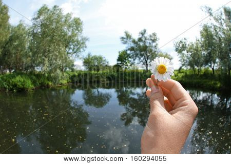 Female hand holding daisy on beautiful river background