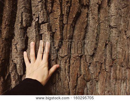 Human hand touching tree trunk, closeup