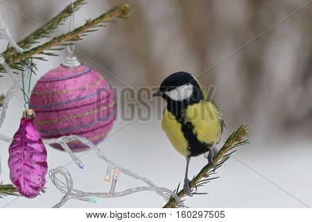 Titmouse sitting on a branch of spruce, decorated for Christmas. Selective focus