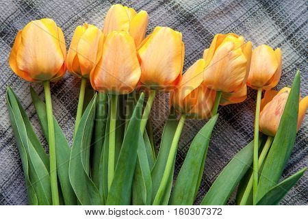 bouquet of yellow fresh  tulips on the textile
