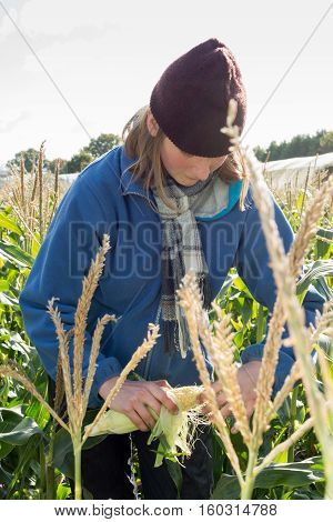 A blonde woman in scarf and wooly hat peels back the husk of an organic sweetcorn cob grown in a field