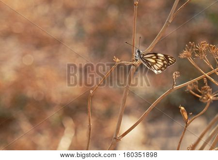 Antique style photo of butterfly on flower for bakground
