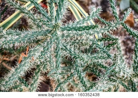 Cactus in botany garden. Closeup. Selective focus