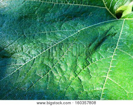 Oil Paint Fresh Leaves Background