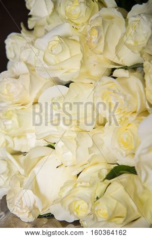 Beautiful Bouquet As A Gift From The Great White Roses.