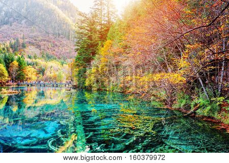Scenic Submerged Tree Trunks In Water Of The Five Flower Lake