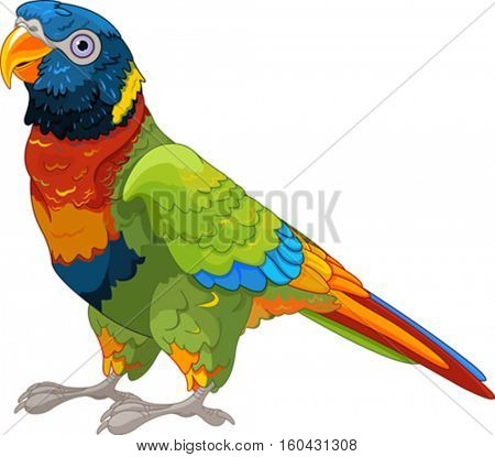 Chattering lory.  Cute parrot with green wings