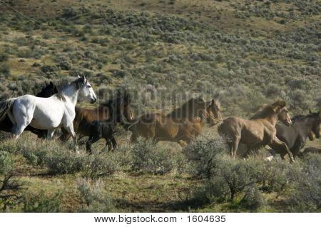 Wild Horses Running Away