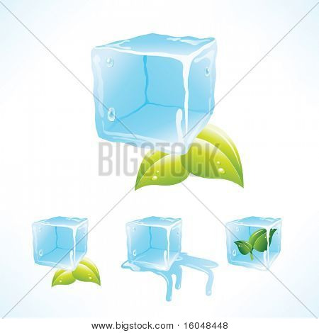 Stylish vector ice cubes  with leafs of mint