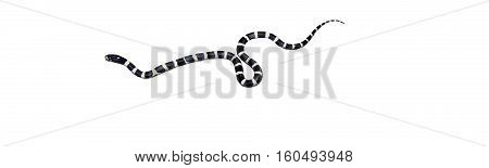 California king snake is one of the most popular snakes in captivity