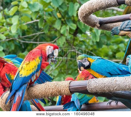 Bright and colourful Macaw birds perched on a post