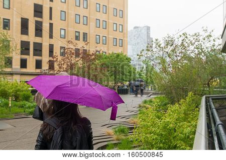 Unknown woman sheltering for the rain under a purple umbrella in the High Line Park in New York City