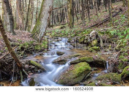 Fast Flowing Trout Stream In Western Pennsylvania