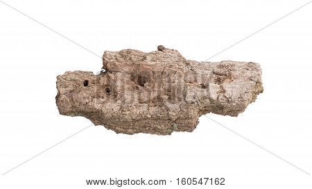 Tree Bark Isolated