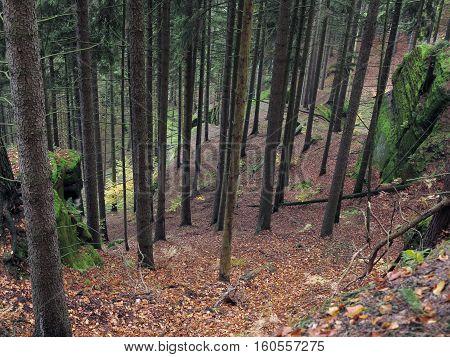 Deep ravine in the coniferous forest in Bohemian Switzerland