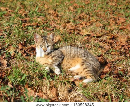 Cat Resting Outdoors