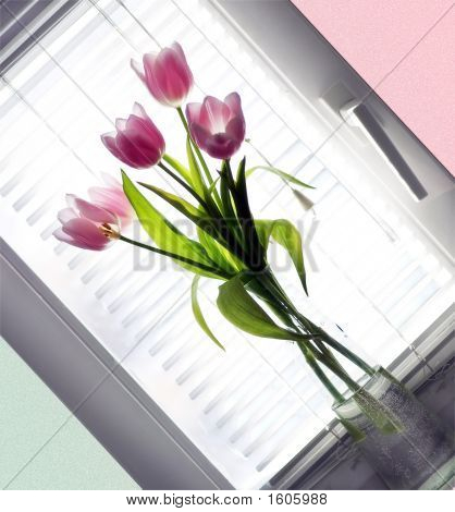 Bouquet Tulip In Glass Vase Beside Window