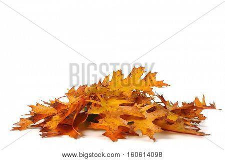 Close image of autumn leafs, colorful autumn leafs