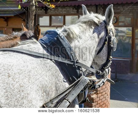 Look at the Horse Goggles Horse Carriage