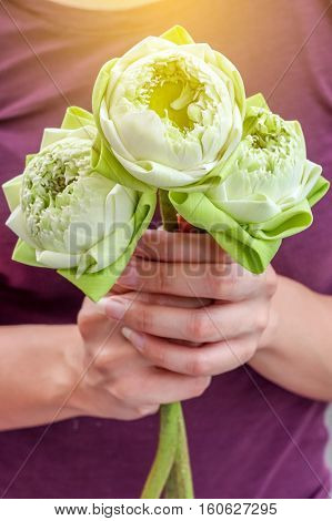 Lady holding beautiful blooming lotus to pay respect to Buddha