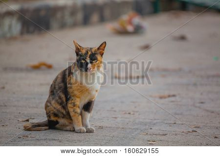 Beautiful white and orange cat on the streett looking at Camera