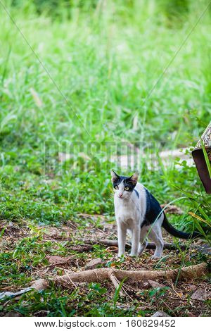 Black and white cat in the grass