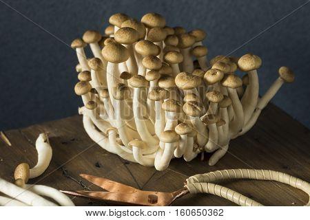 Raw Organic Brown Beech Mushrooms