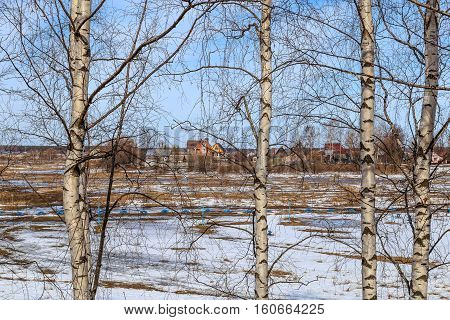 Spring landscape, field with the remnants of snow through the branches of birch