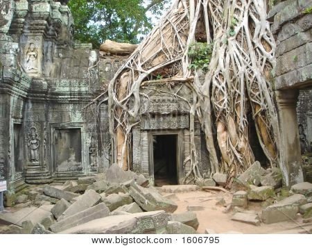 A Tree Over Old Ruin Temple, Ta Prohm, Bayon, Angkor Tom, Cambodgia