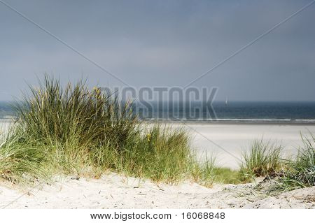 Grass growing in the Dutch dunes