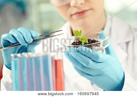 Scientist researching a plant in petri dish