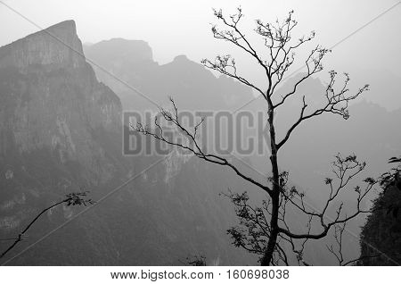 A black and white picture of a tree against a background of the mountains of Tianmen Shan in Zhangjiajie city in Hunan province China.
