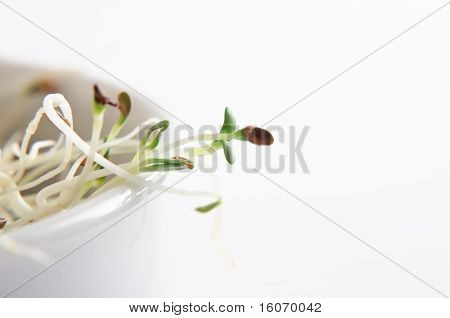 Alfalfa Sprouts In Bowl - Macro