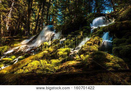 Clearwater Falls Umpqua National Forest