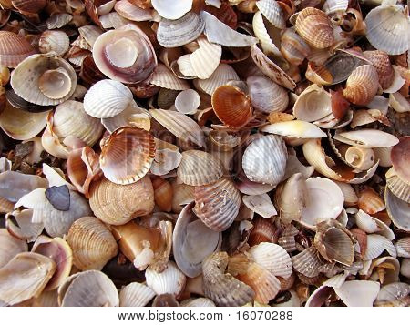 Cockleshells background. Good use for background.