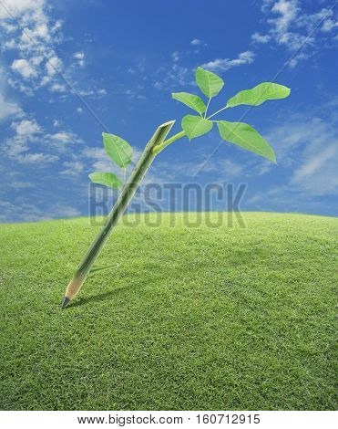 Wooden pencil with trunk tree and leaves on grass field over blue sky Green idea concept