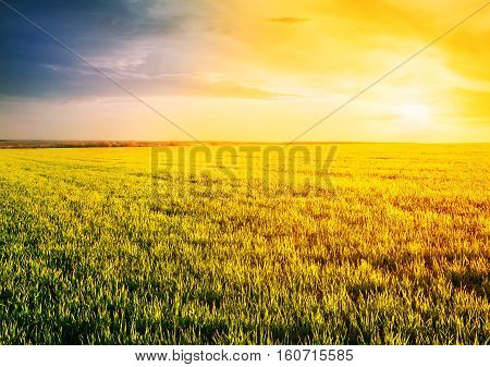 Field with grass at sunset under dramatic sky