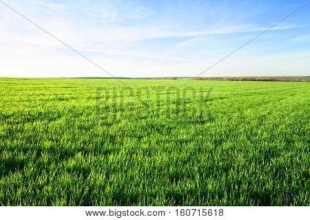 Field with green grass under blue sky