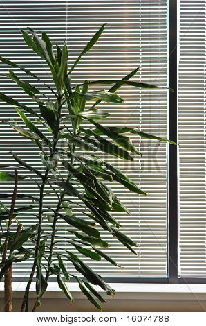 Green Houseplant Against The Window With The Blinds