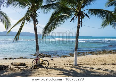 View of a beach with palm trees in Puerto Viejo de Talamanca Costa Rica Central America