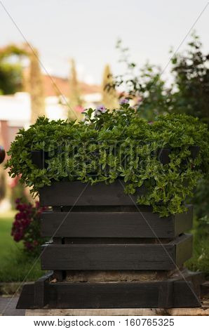 wooden bed with green plants in the open field