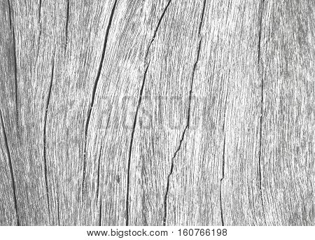 Wood texture closeup photo. White timber board with weathered crack lines. Natural background for rustic design. Grey wooden surface image. Silver tree trunk without bark. Sea wood monochrome image