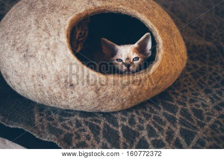 Devon Rex cat and kitten are sleeping in felted warm sleeping pet cave. Cat likes to sleep in comfortable and safe cave made of wool - simple minimal handmade design. Scandinavian style, natural colors. Sun light