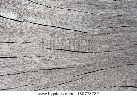 Grey wood texture close up photo. White and grey wood background. White old tree near the sea. Curves and lines on rustic timber. Rough timber texture. Sea wood backdrop. Shabby chic wooden background
