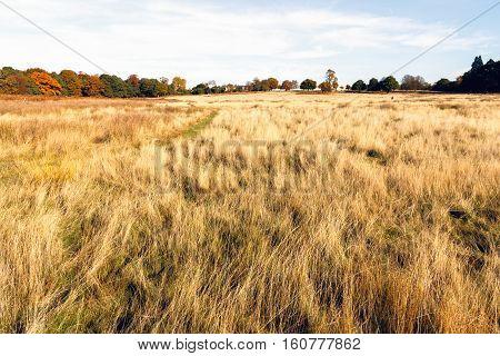 Dry Grasslands In Richmond Park, London